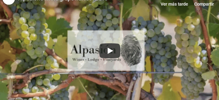 Alpasion's first harvest video
